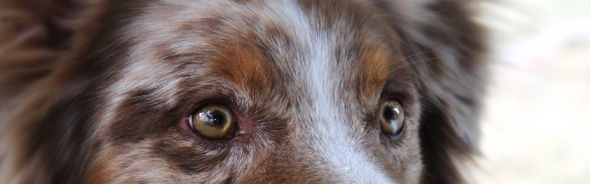 Kurse für Hunde in Monthey, Wallis